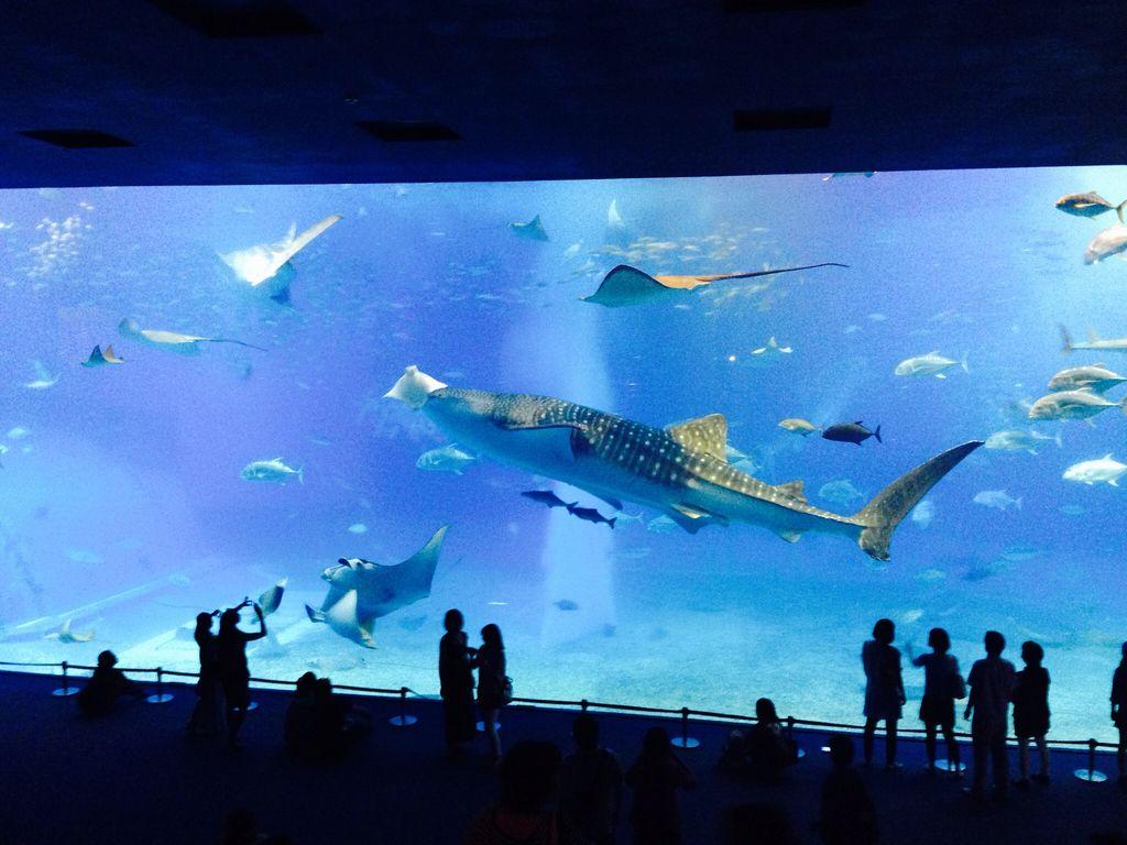 ◆『沖縄美ら海水族館』  絶対行きたい《フォトリップ》