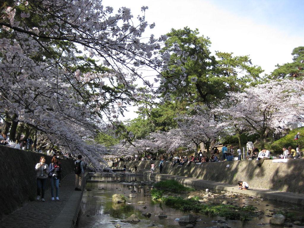 『夙川河川敷緑地(夙川公園)』  絶対行きたい《フォトリップ》